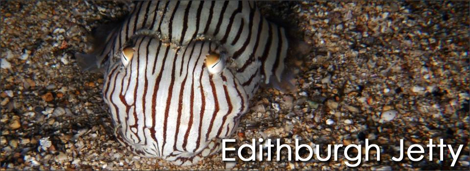 Top 10 Australian Dive Sites Edithburgh Jetty