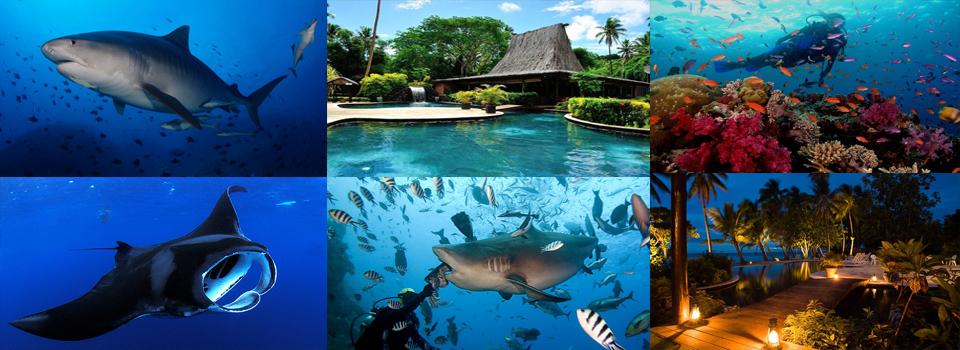 Beqa Lagoon Fiji Trip