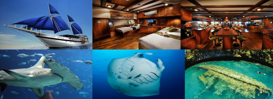 Join us in Palau in 2018 - Palau Siren Luxury Liveaboard Trip