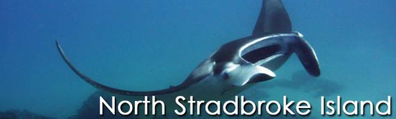 08/03 Bucket List Dive: Straddie's Mantas!