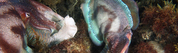 10/06 Whyalla Cuttlefish Weekend Away