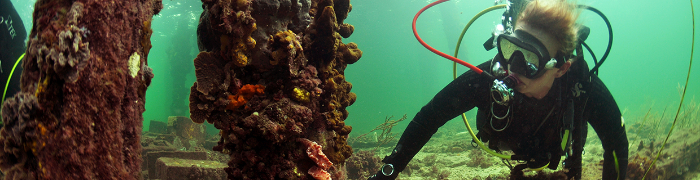 Scuba Diving in South Australia - Edithburgh Jetty