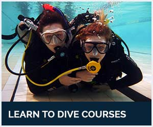 Learn to Dive with Diving Adelaide's PADI Open Water Diver Course