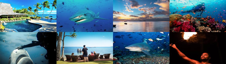 Fiji Beqa Lagoon Dive Trip